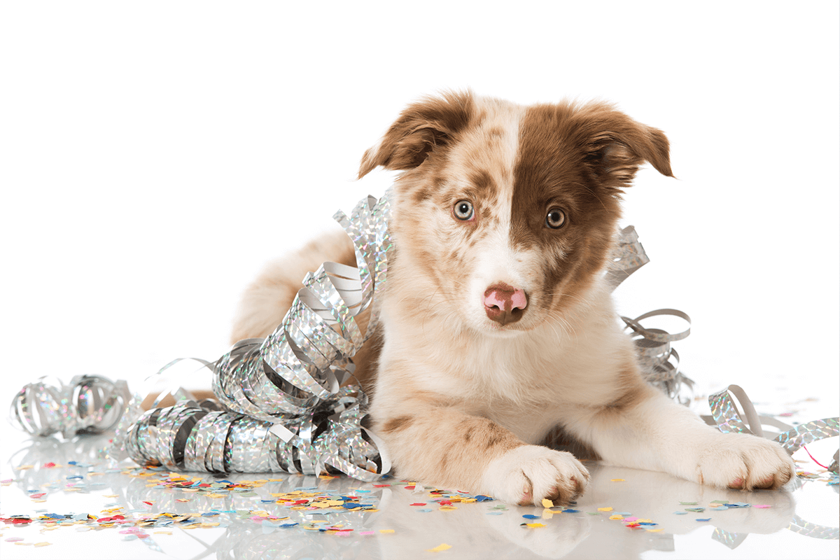 CELEBRATE & HAVE A GOOD TIME WITH Dog Toy Subscription Delivered to Anwhere in the USA
