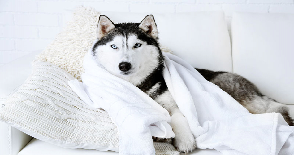 How Often Should You Bathe Your Dog?